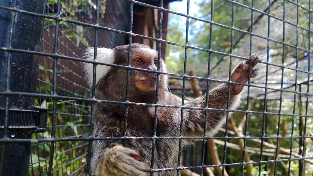 Petit primate wp_20130615_016