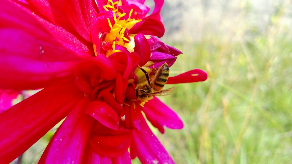 Abeille 2/2 wp_20130830_005-1